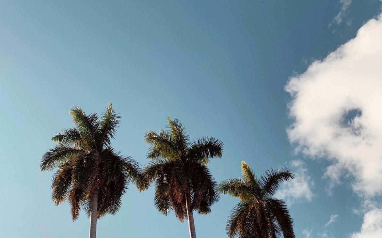 Winter in Miami